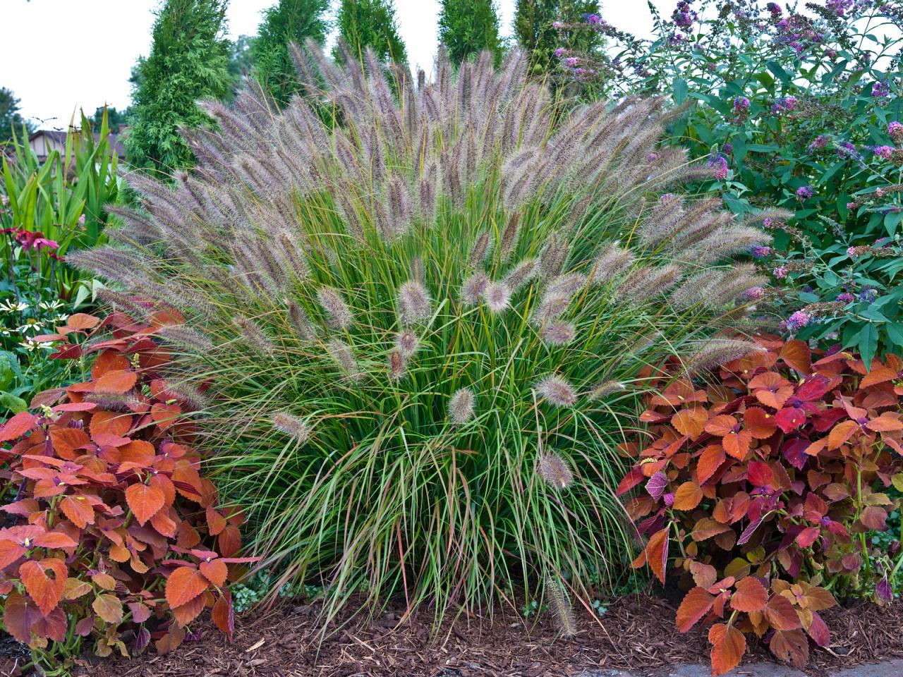 Planting in the fall for the perfect spring garden for Tall grass plants