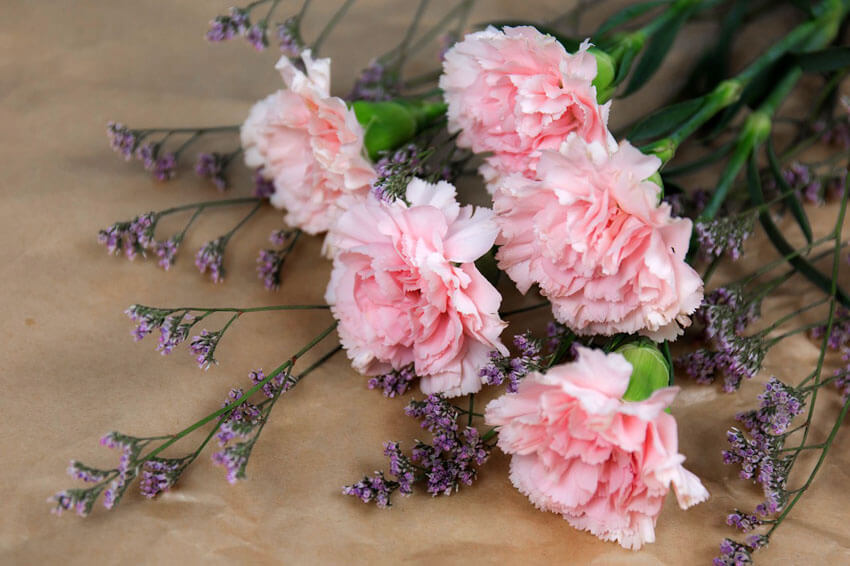 If you want a break from tradition, give carnations on Valentine's Day!