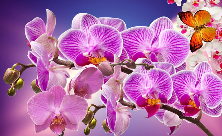 Purple orchids are equally as romantic as red roses!