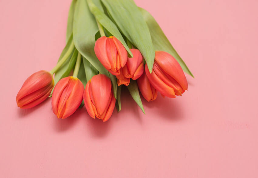 Red tulips are a great alternative to red roses.