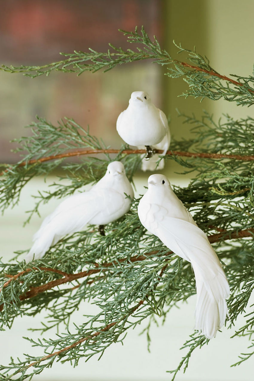 This doves are a something you must have. Image Source: Gardeners