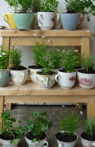 diy-teacup-herb-garden