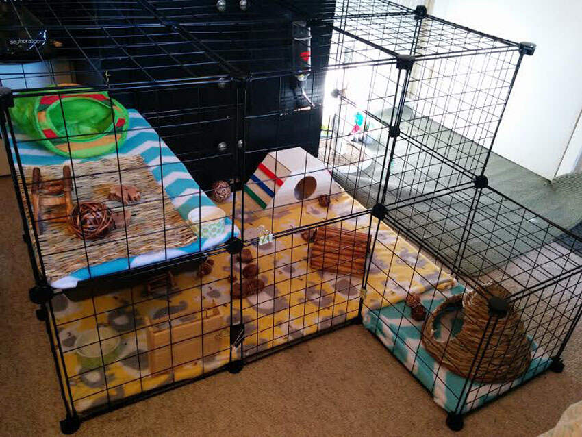 These DIY cube cages for rabbits are easy and cusomtizable!
