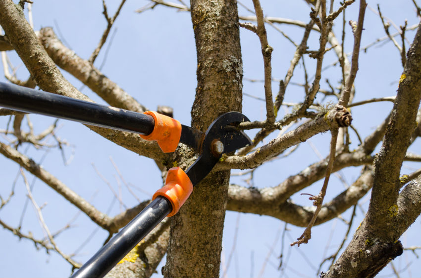 Keep your roof and powerlines safe by trimming your trees. Image Source: Senske