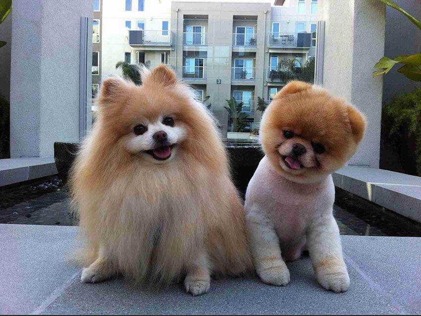 Adorable Puppy Duo