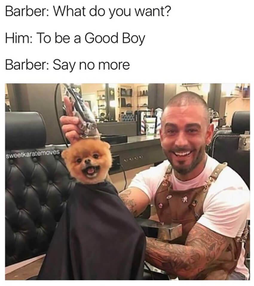 Good boy dog