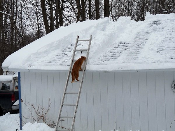 winter-pet-safety-roof