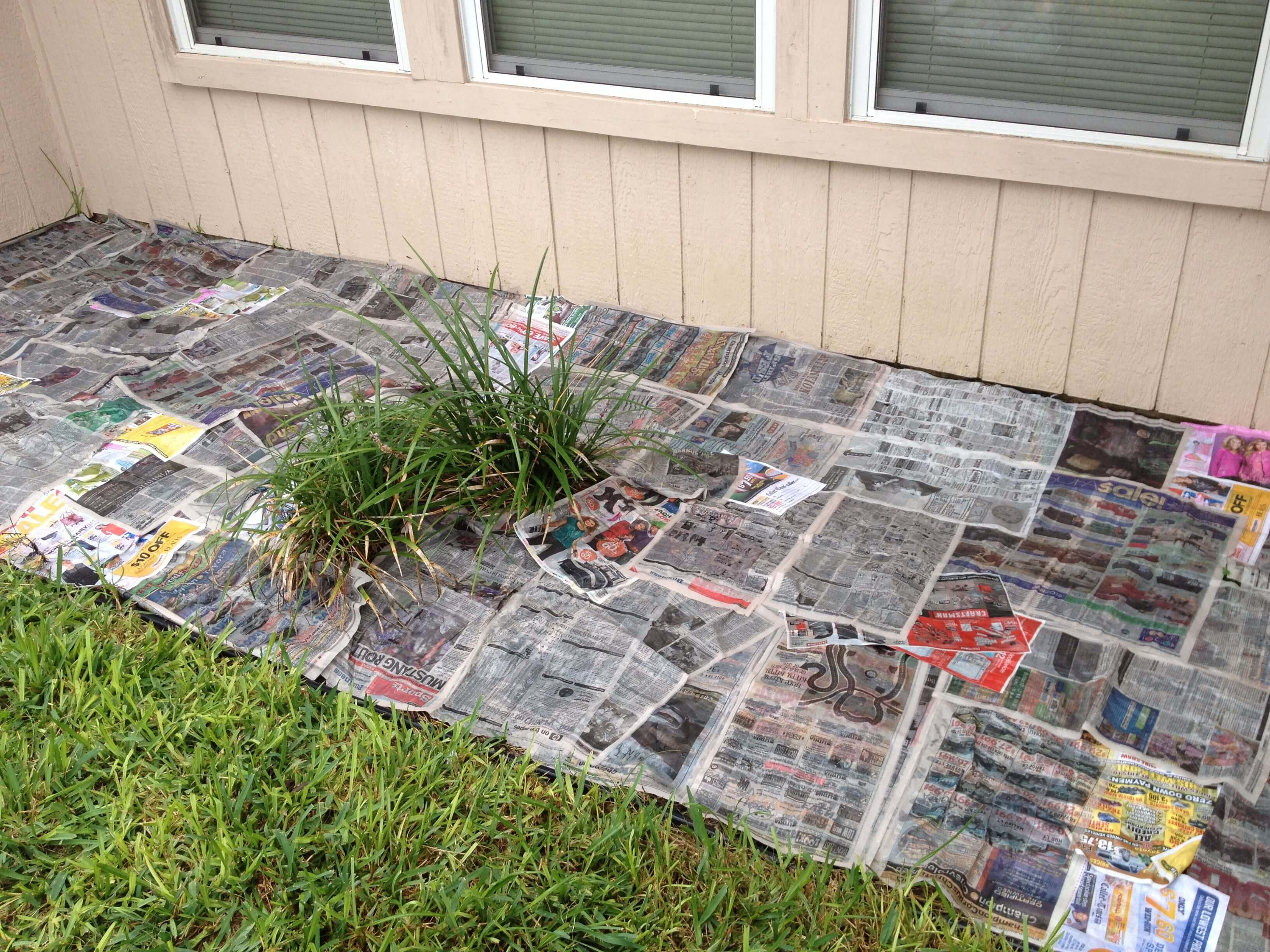 Using newspaper to protect your plants
